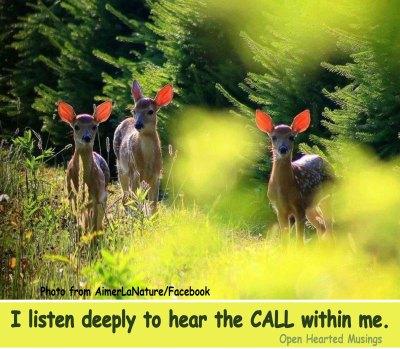 ListenUp_deer_Aimer la Nature_Call_OHM.jpg