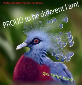 Victoria Crowned Pigeon Incredible Planet/Facebook