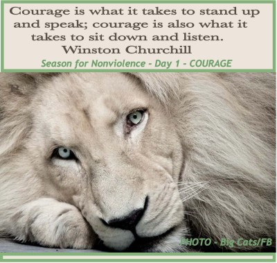 lion_BigCats_Courage_SNV
