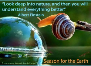 snail_waterbubble_AmazingAnimalsBeautifulNature.STE