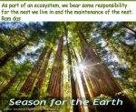 sunburstthrutalltrees_Sociedad Argentina de Horticultura_SftE_NEST