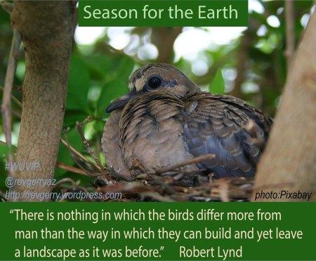 birdnesting_Pixabayjpg_STE