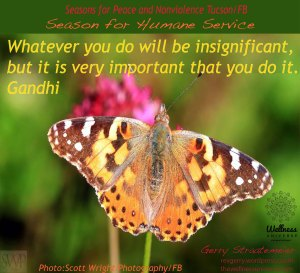 BrightButtefly_SWP._SHS_Gandhi