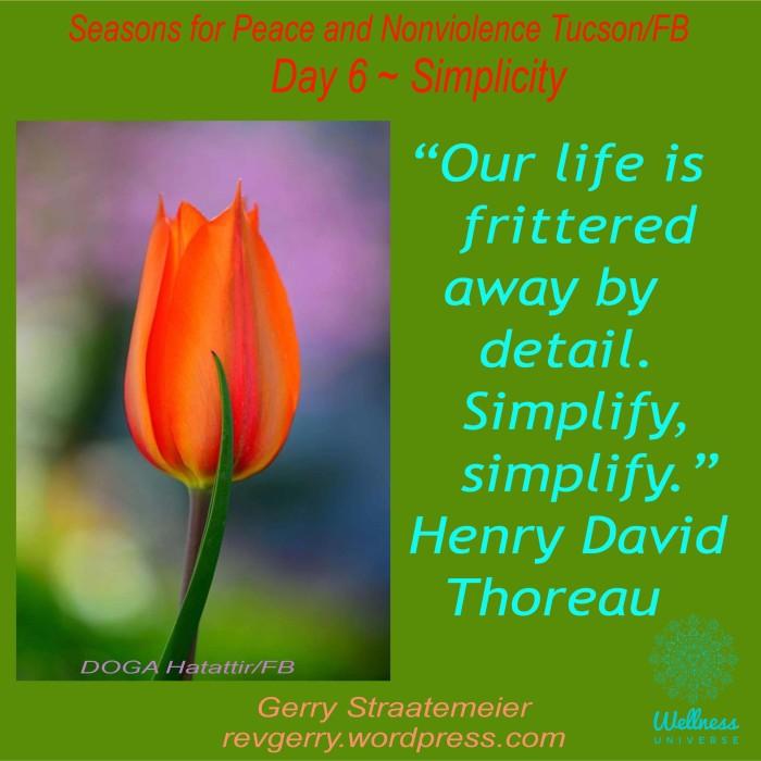 tulip_DOĞA Hayattır2016SNV_Day6_SIMPLICITY
