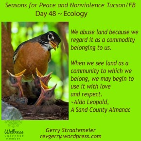 Season for Nonviolence ~ Day 48 ~ ECOLOGY