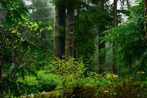 old-growth-coastal-forest_public-domain-image.com